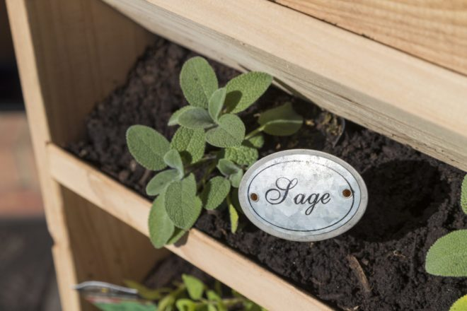 Sage planted in vertical planter.